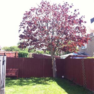Woodsman Tree Care - Bristol/Bath based tree surgeons